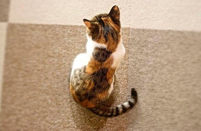 猫カフェ 猫が来ない